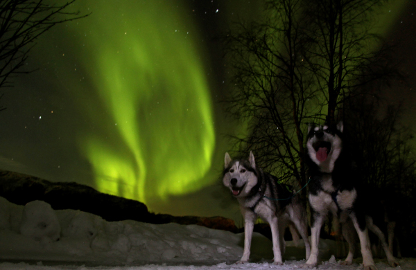 Northern Lights Sled Dog Rescue Indianapolis Indiana